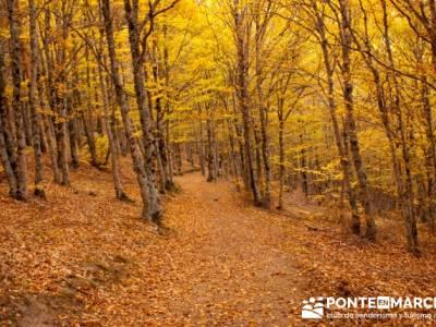 Fotos de senderismo, Parque Natural del Hayedo de Tejera Negra; senderismo a tu aire